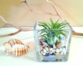 Air plant terrarium - Cube glass vase - Air plant - River rocks  - Home and living - Modern planter - Cottage decor - Beach decor