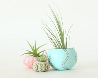Teeny Tiny Air Plant Planter Trio with Air Plants  -  Pink, Aqua, Gold.