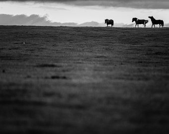 Black and white horse photo print, three horses in the distance on the Mongolian steppes. Horse and landscape photography wall art decor