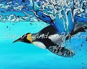 Penguin Dive - A print of a Sarah Landon original painting.