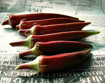 Red Velvet Okra, colorful heirloom, 25 seeds, gorgeous plant, loves summer heat,  55 days, best for gumbo, great deep fried