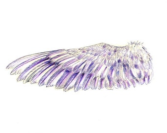"Bird wing art print of an original drawing available 5x7"" or 8x10"""