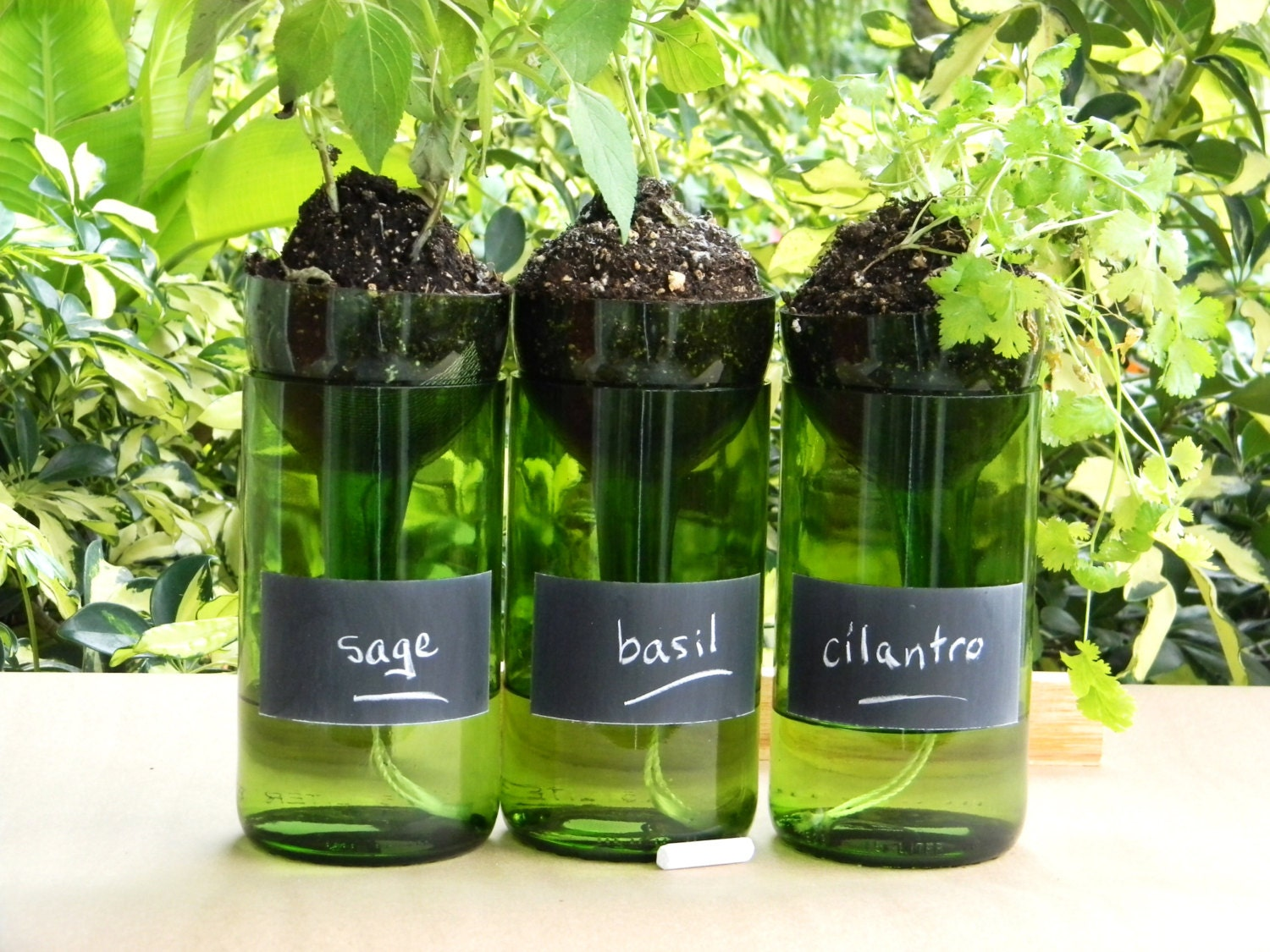 Wine Bottle Planters Self Watering With Chalkboard By