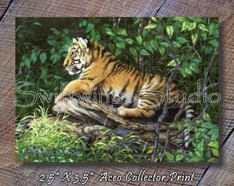 ACEO Tiger Print - Miniature Wildlife Print - Tiger Image - ACEO Wildlife Card - Tiger Print - Wildlife Print
