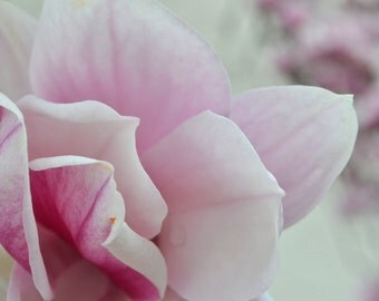 Beautiful Pink Magnolia Digital Photograph
