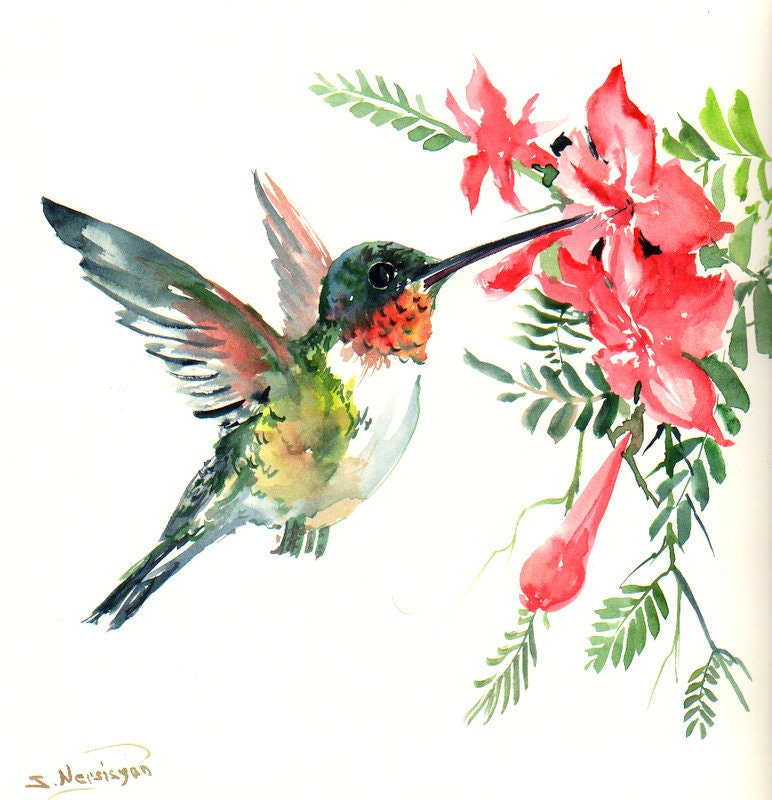 Flying Hummingbird original watercolor painting 12 X 12 in