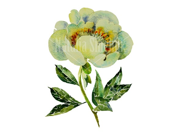 White peony head with leaves digital download from original watercolor , cottage chic style painting clip art