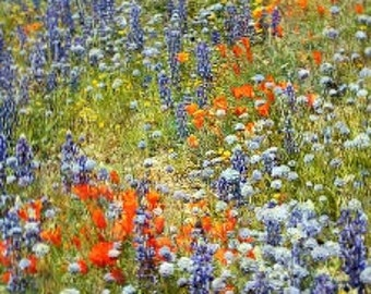 Wildflowers of the Pacific Northwest, Oregon, organic seeds