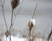 gray winter scene | Snow PHOTO | Somber snowy Michigan | moody nature / delicate Queen Anne's lace / gray fine art / dreisht botanical art