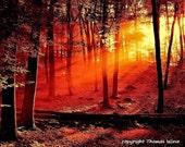 Photography, sun kisses forest, high gloss premium paper, 20cm x 30cm, signed