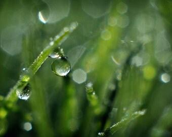 Green Grass Photography, Dew Drops Morning Nature Photograph, Horizontal Home Decor Wall Art, Water Drop Fine Art Macro Grass Photo Print