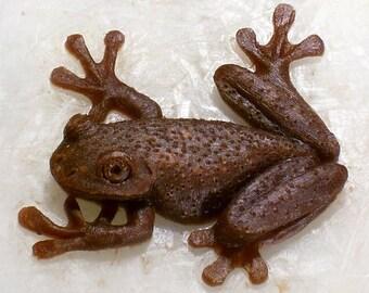 Tree Frog #3.. New Design.