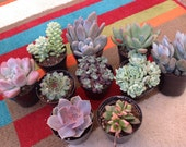 This listing is for a collection of 10 beautiful succulents for you to have some fun with! Pick 10 plants from our small section.