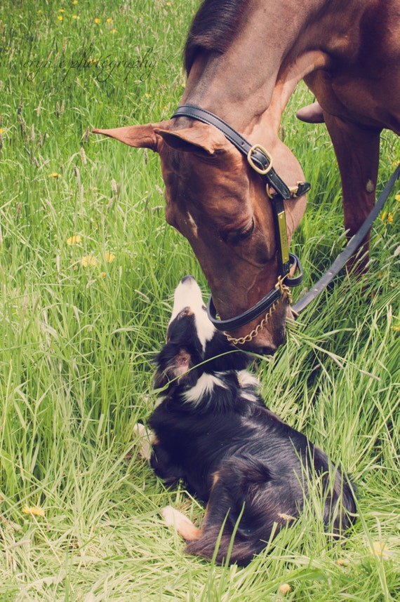 horse photography, dogs, best friends, horse and dog, best friends, dog photo, animal love, animals, home decor