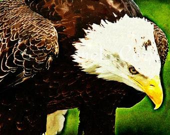 "Bald Eagle painting: bald eagle art print on canvas 16x20"" American symbol art bird of prey painting"