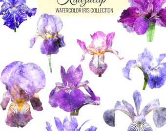 Watercolor Iris Collection - Commercial and Personal Use