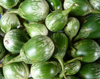 Oblong eggplant 600 seeds  200 seeds heirloom green vegetable