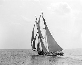 Francis P. Mesquita 1907 Historic Photo Reproduction 8x10 Sailboat at Lipton Cup Race