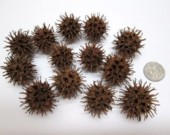 100+ Small Sweet Gum Balls For Crafts Potpourri Decorating Without Stems