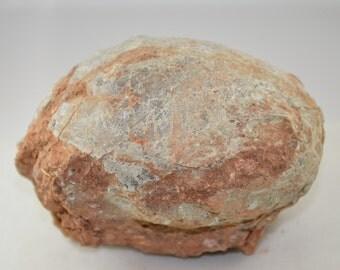 Hadrosaurus Dinosaur Fossil Egg