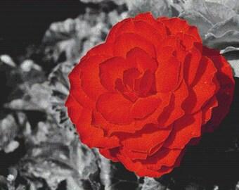 Red Flower PDF Cross Stitch Pattern