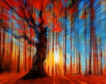 Forrest And Light - Giclee Print