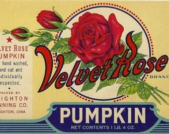 Unused 1930's Velvet Rose Pumpkin Can Label From Brighton Canning Co. in Brighton, Iowa