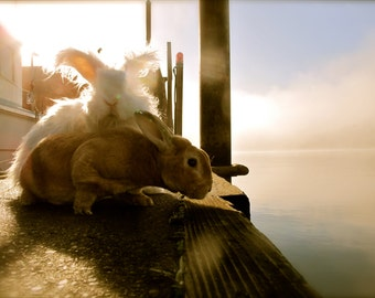 Bunnies on the Edge Fine Art Bunny Photography Home Decor Nursery Art Rabbit Photo Cute Bunny Photos Children's Room Art Easter Bunny Rabbit