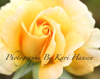 Yellow Rose Soft Focus Fine Art Photography Flower Photography Romantic Tranquil Macro Floral Wall Decor Yellow Wall Decor Green Wall Decor
