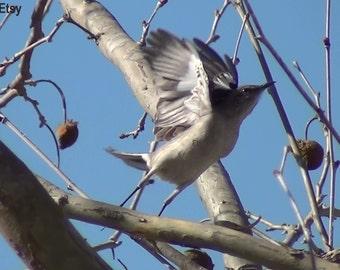 Digital Download, Nature Photography, Bird, Bird Picture, Fall, Bird Photo, Bird Flying, Art, Stock photography, Stock photo