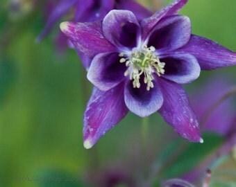 Fine Art Photography -- Purple Star