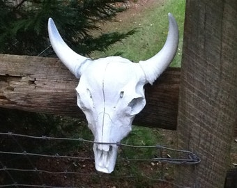 You Choose Color Faux Taxidermy Cow Skull Small Steer Head