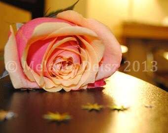 Pretty pink rose with stars