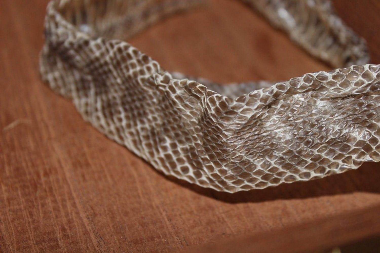 Complete Western Hognose Snake Shed Skin 22