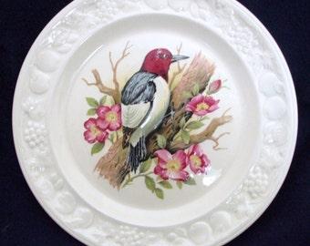 Vintage C 1980 Royal Worcester, Palissy Crown Ware Collectors Plate. Red Headed Woodpecker American Birds Series.