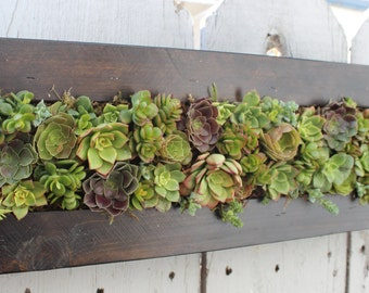 Handmade Stained Cedar Succulent Hanging Planter. Awesome Gift!