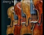 Violins, Fine Art Print, Violin Photography, Music Photography, Music, Violin Art, Not Available in Norway and other Scandavian Countries