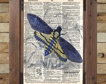 Insect illustration, death moth, dictionary art print