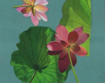 Print of an original pastel drawing of a pink lotus flower