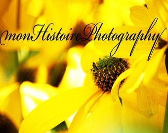 Yellow Flower, Nature Photography
