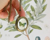 SALE - Emerald Butterfly Locket - Antique Green Butterfly Illustration - Brass Photo Necklace