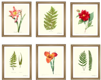 "Botanical Prints Set. ANY 6 botanical prints. Floral Wall Art Set. Flower prints set.  5x7"" 8x10"" 11x14"""
