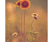 Flower, Wildflower, Nature, Landscape Photography - Prairie Sunflowers