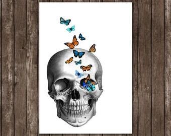 skull art - skull with butterflies - giclee art print - skull art print - anatomy art