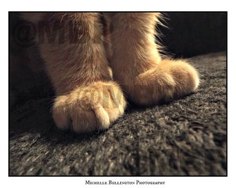 Cat Photography, Animal Photography, Paws, Close Up Photography, Print Photography