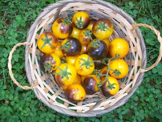 Heirloom Bumble Bee Cherry Tomato Seeds 25 pack