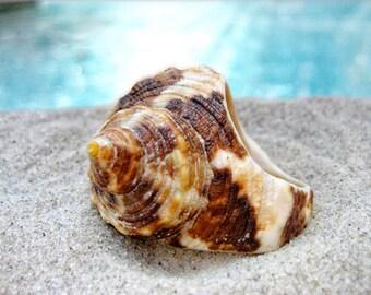 Natural Brown Shell Ring
