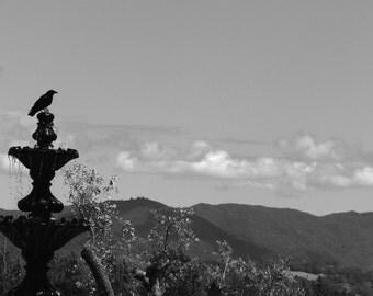 Jeriko Crow