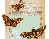 The escape  - Art Print - Butterflies and moths  - book page art