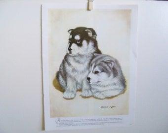 Baby Siberian Huskies - Animal Print - Puppy Print - Vintage Animal Print - Dog Book Print - Sadako Mano - Walter Foster Art - 1980s